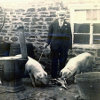 Thumbnail: George Ward with his pigs at the back of the Fleur de Lys